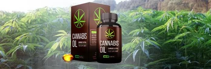 Cannabis oil - ingrédients naturels. Effets d'application
